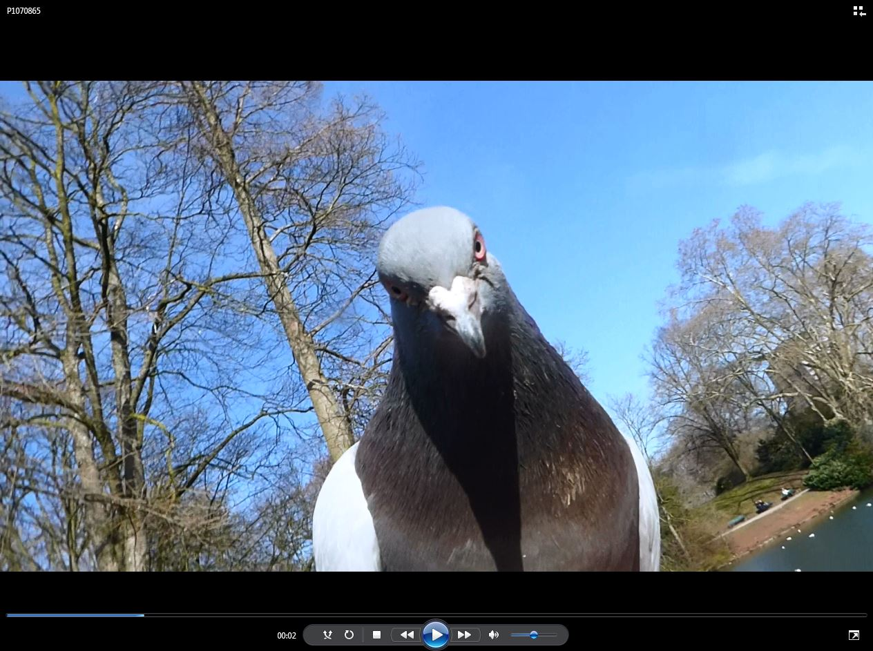 Video-Frame eines Films über Tauben