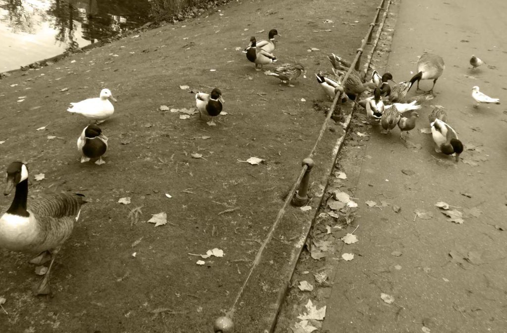 Vögel im Hofgarten füttern