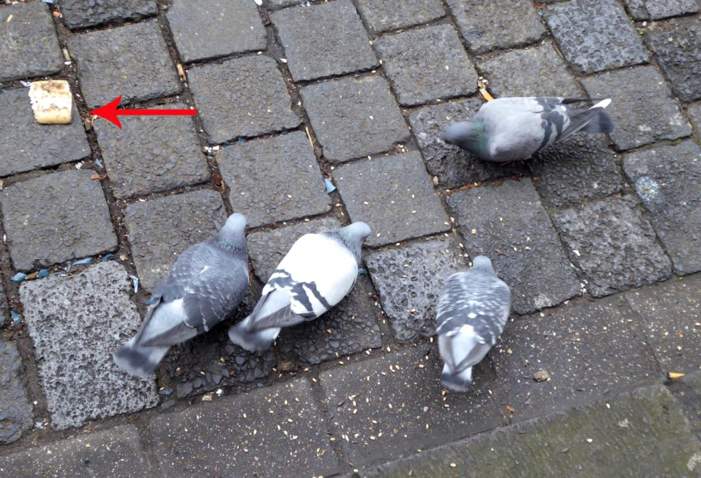 Tauben in derDüsseldorfer Altstadt