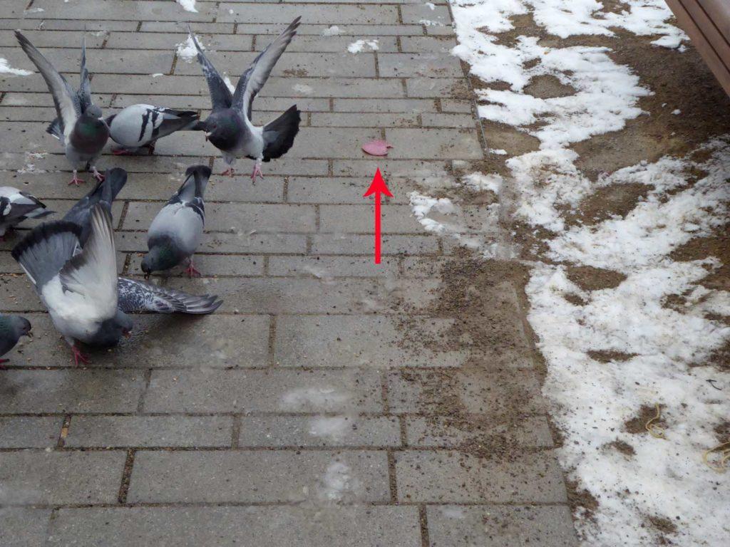 Tauben fliege auf Körern, nicht auf Salami