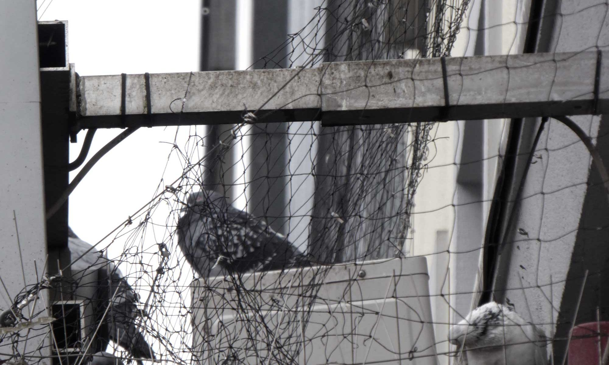 VERgrämung von Tauben in Düsseldorf