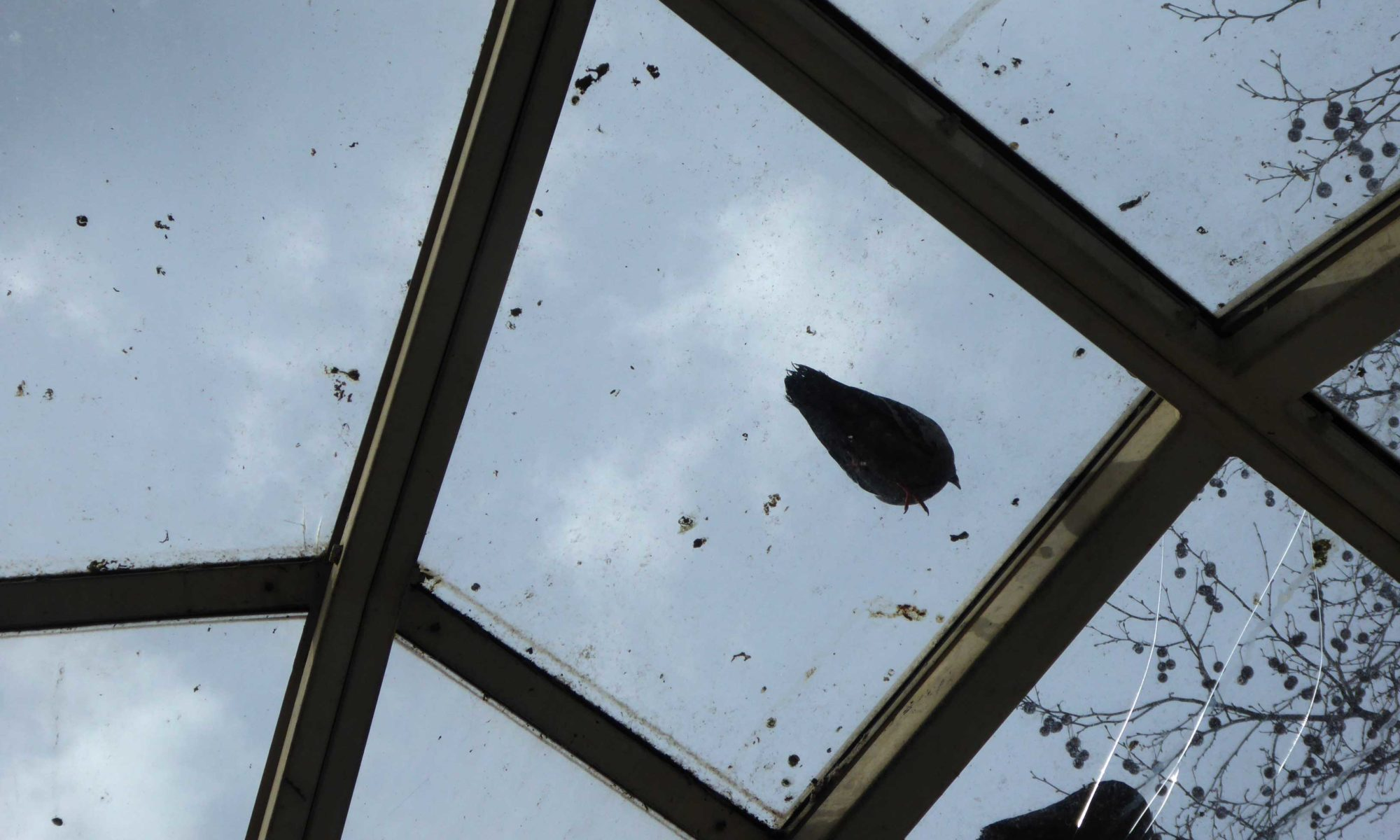 Taubenkot auf einem Glasdach