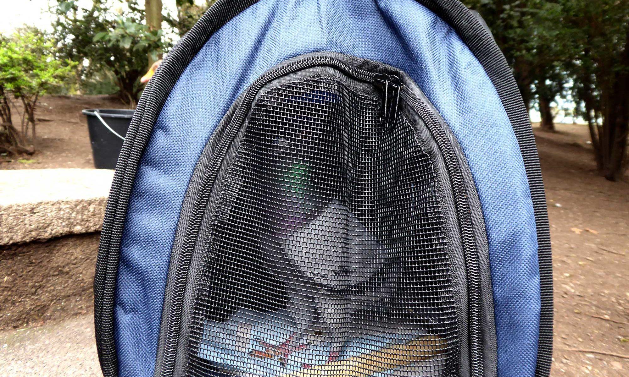 Taube Humpel 1.0 wartet auf Freilassung