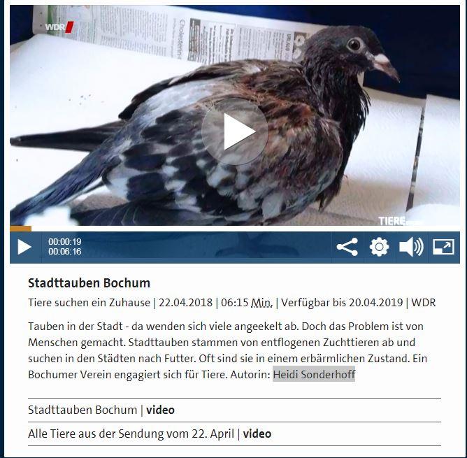 Vorschau von Stadtauben in Bochum - Tiere suchen ein Zuhause - WDR.de