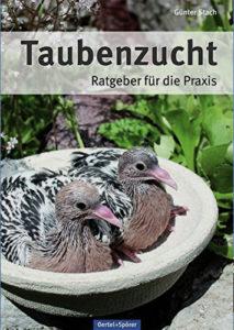 Taubenzucht von Günter Stach
