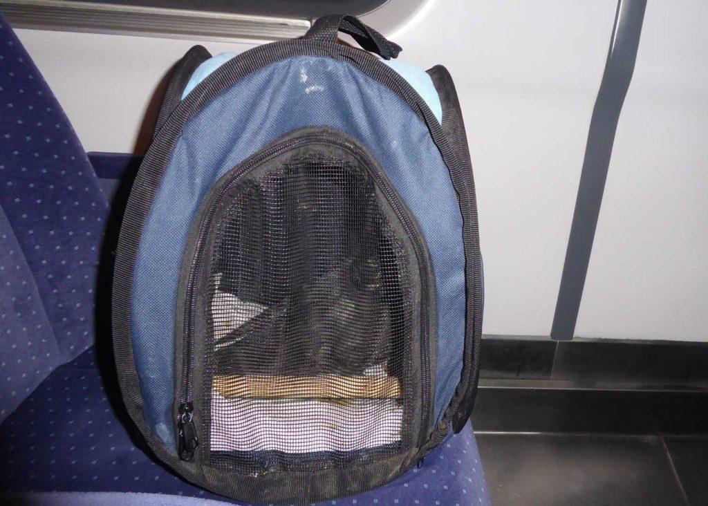 Transport einer Taube mit der Bahn