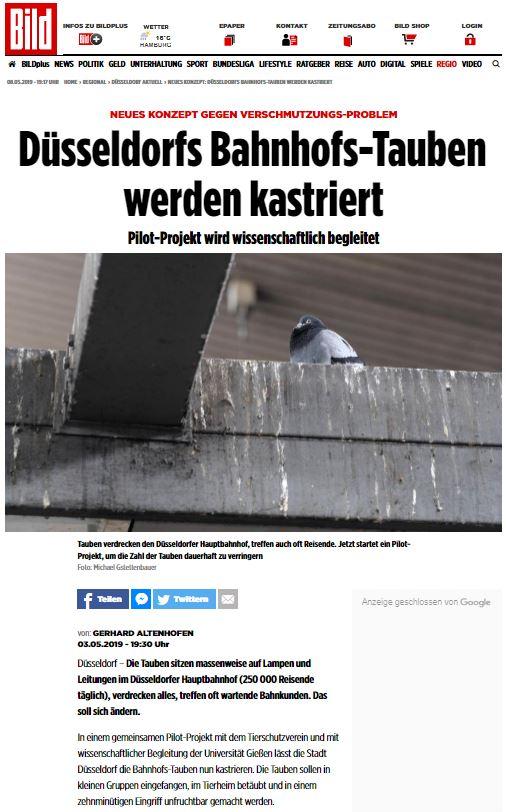 Düsseldorf will Tauben kastrieren lassen. Die Bild schreibt warum und wie