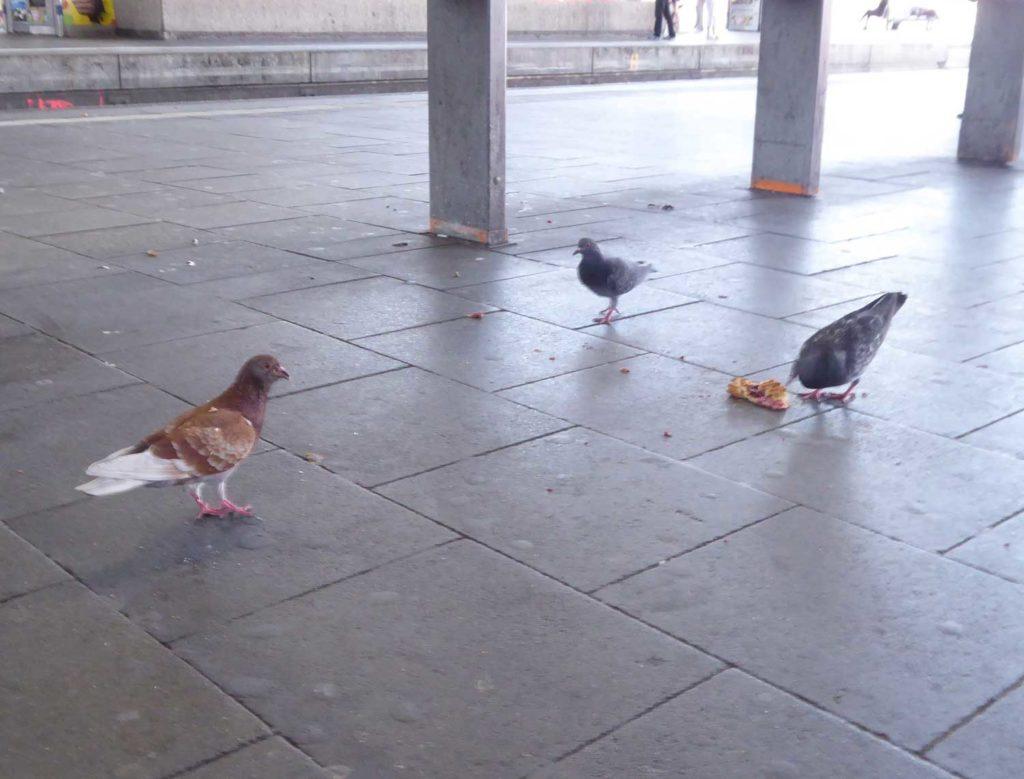 Tauben am Düsseldorfer Hauptbahnhof