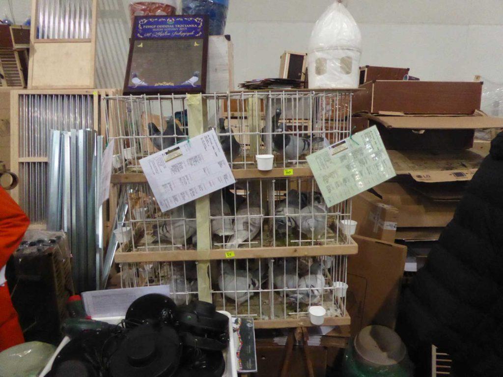 In Käfig gepresste Tauben wie auf auf einem asiatischen Basar