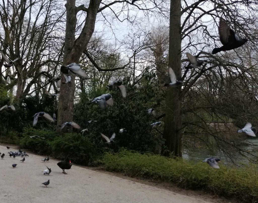 Stadttauben verfolgen mich im Park