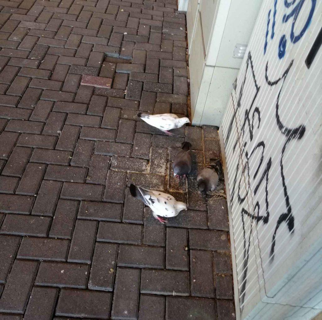 Nur wenige Tauben am S-Bahnhof