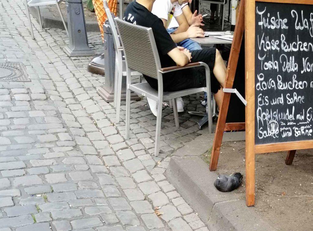 Laufunfähige Taubein der Düsseldorfer Altstadt